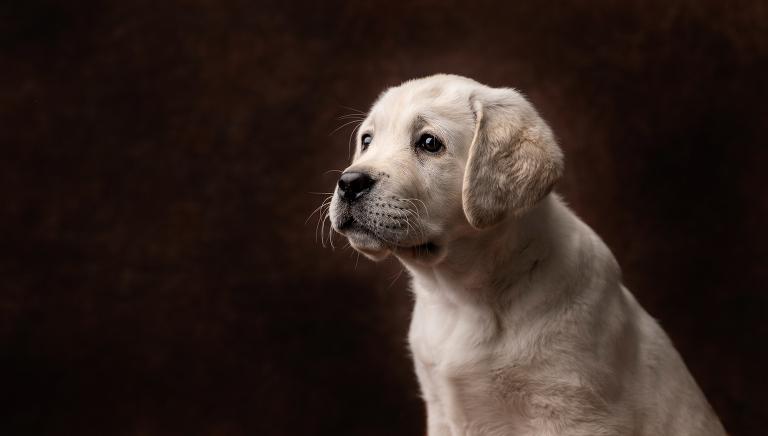 hundfoto utomhus, hundfoto i studio, hundfotograf, terri lindholm, lindholm photography, djurfoto stockholm