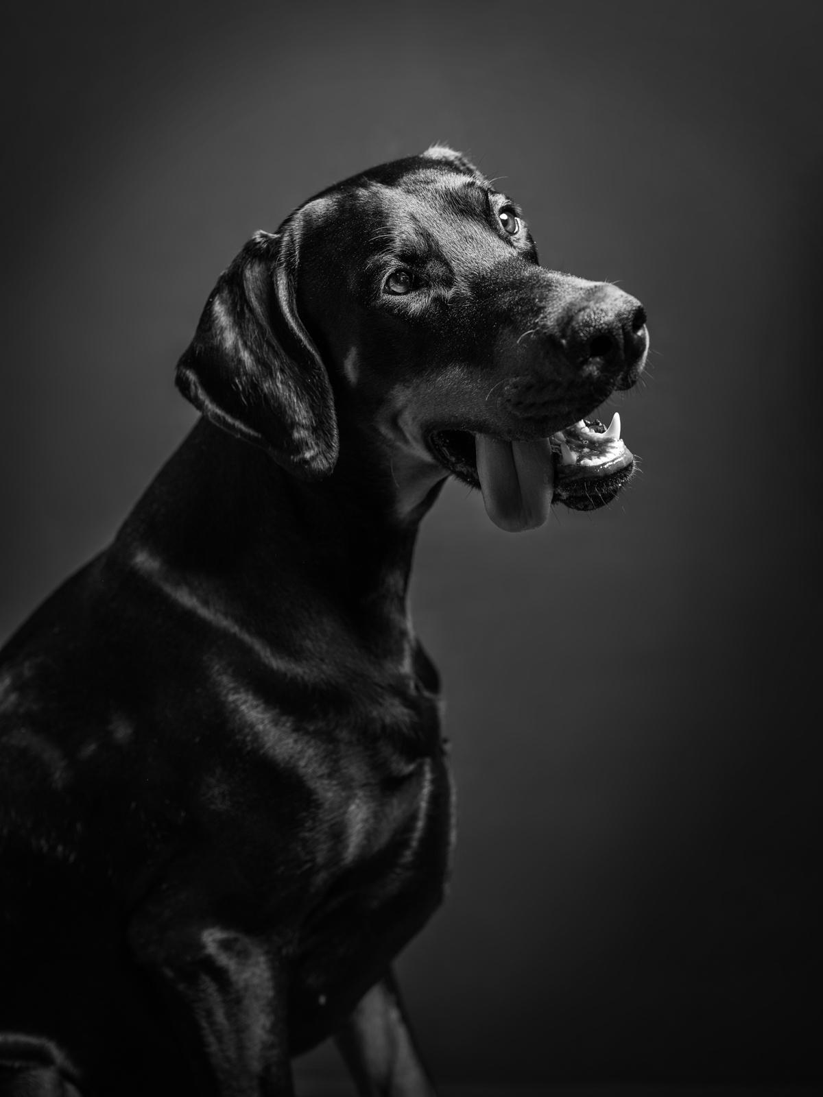 kundfoto utomhus, hundfoto i studio, hundfotograf, terri lindholm, lindholm photography, djurfoto stockholm
